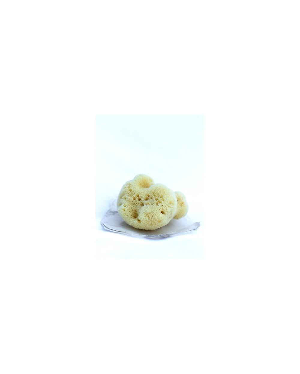 Natural Shell