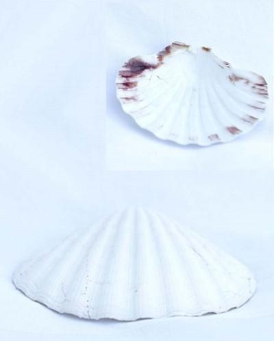 Natural Shell Siciliana.lt