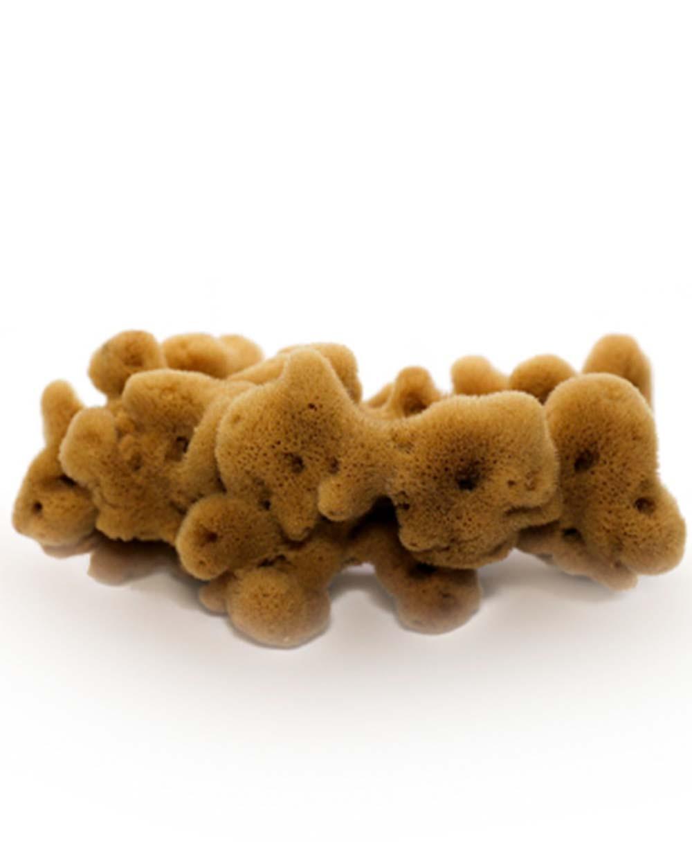 Natural Sea Sponge FINE DAMA (half-processed), 12 cm Siciliana.lt