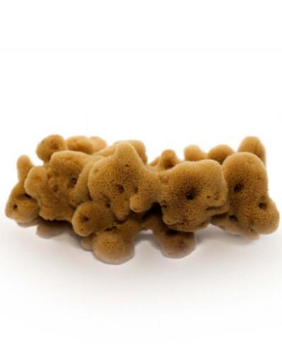 Natural Sea Sponge FINE DAMA (half-processed), 18 cm Siciliana.lt