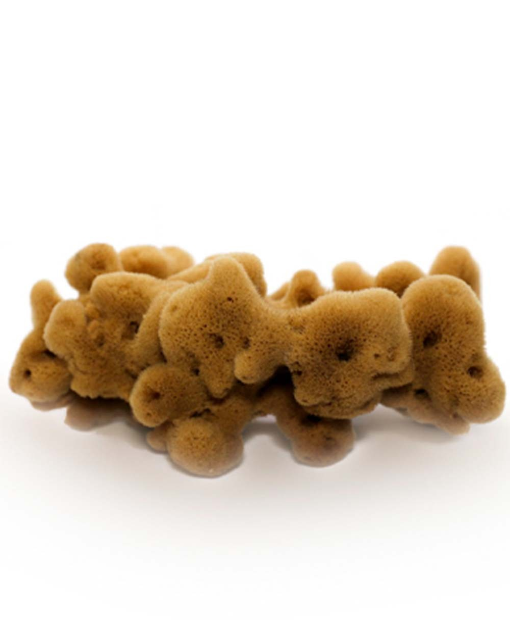 Natural Sea Sponge FINE DAMA (half-processed), 22 cm Siciliana.lt