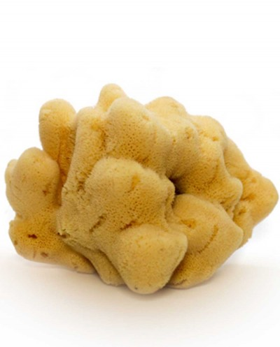 Natural Sea Sponge FINE DAMA (processed), 22 cm Siciliana.lt