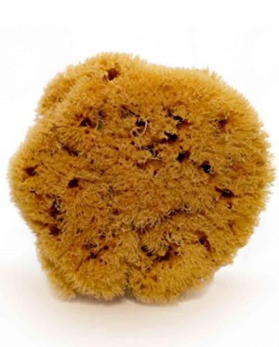 Natural Sea Sponge ZIMOCA (half-processed), 10 cm Siciliana.lt