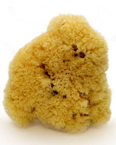 Natural Sea Sponge ZIMOCA (processed), 12 cm Siciliana.lt