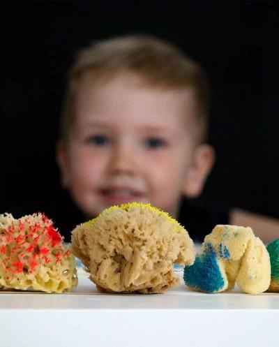 Sea Sponges Kit For Arts & Crafts Siciliana.lt